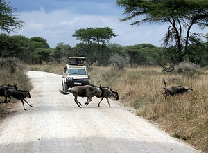 tarangire getting there