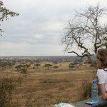 tarangire safaris