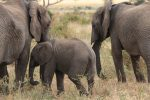 Attractions in Tarangire National Park