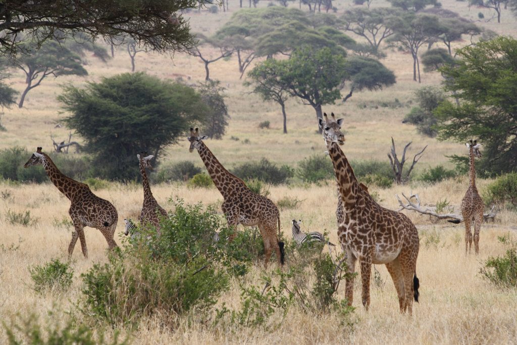 13 Best Things To Do in Arusha Tanzania