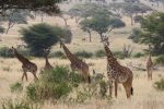 The Best time to visit Tarangire National Park